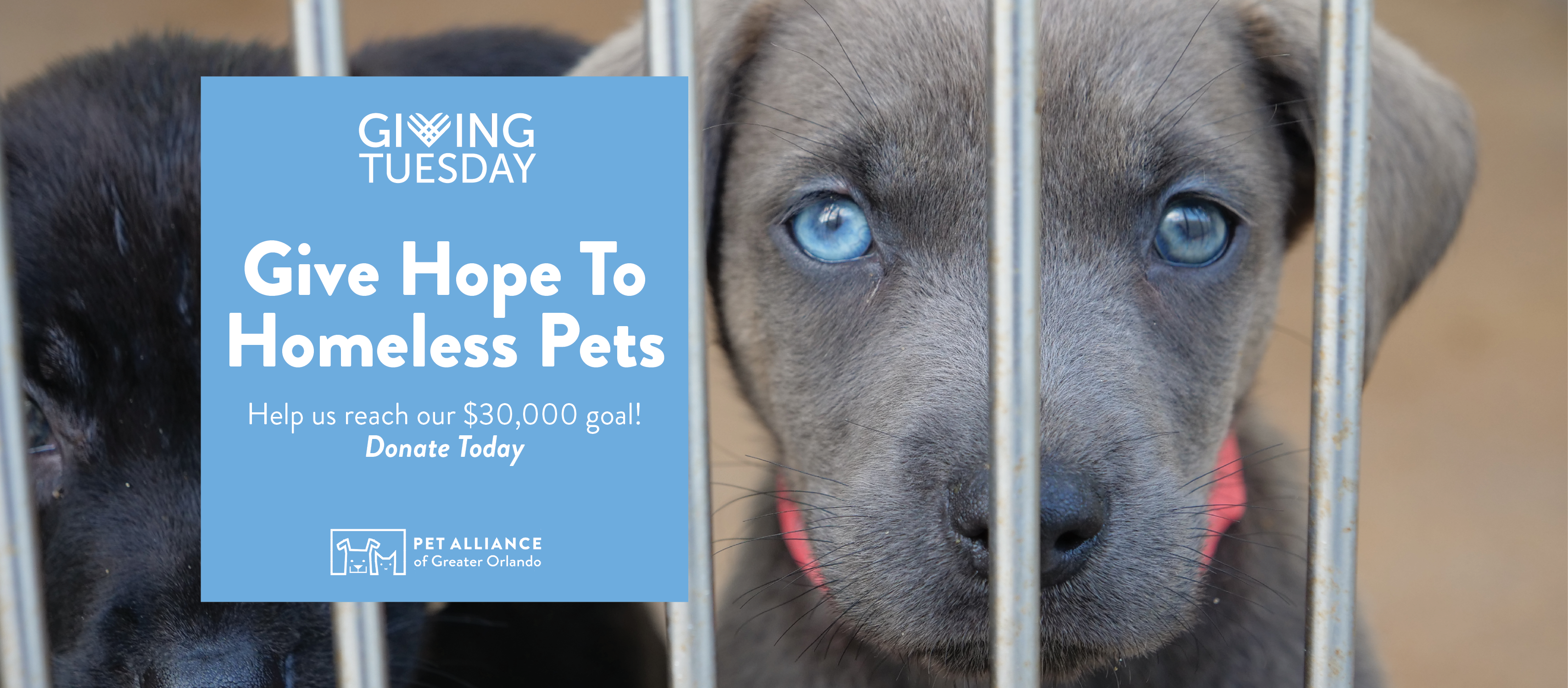 Pet Alliance Giving Tuesday